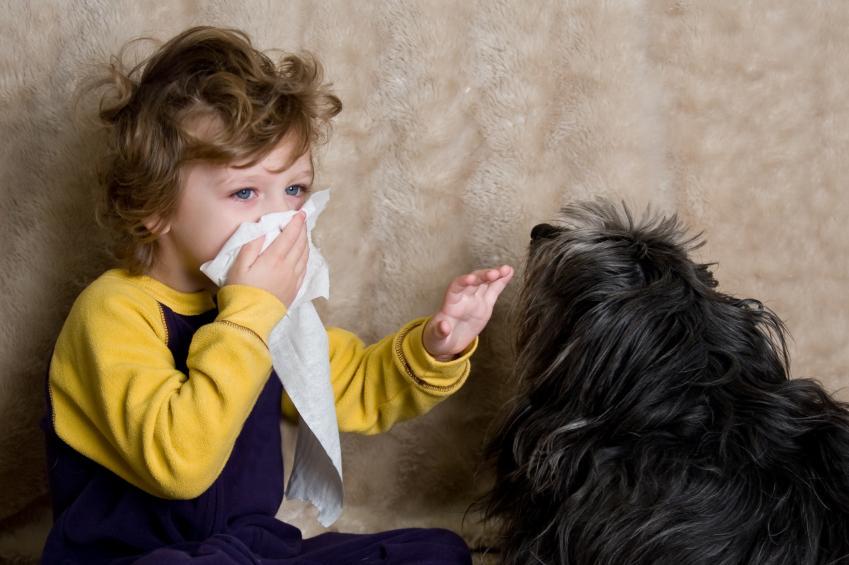 Аллергия на животных у детей симптомы