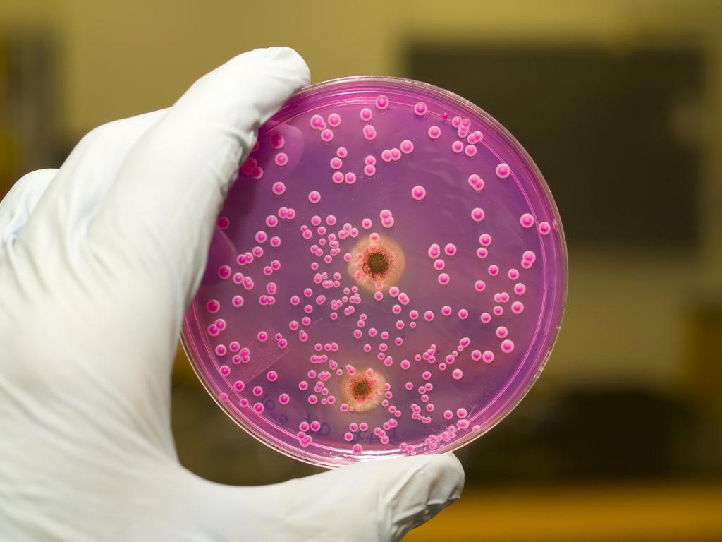 Кандидоз кожи: лечение, кожный, гладкой, у детей, кожных покровов
